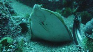 Flounder Feeding