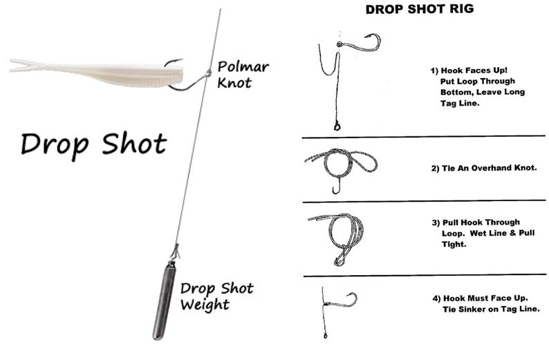 Drop Shot Rig